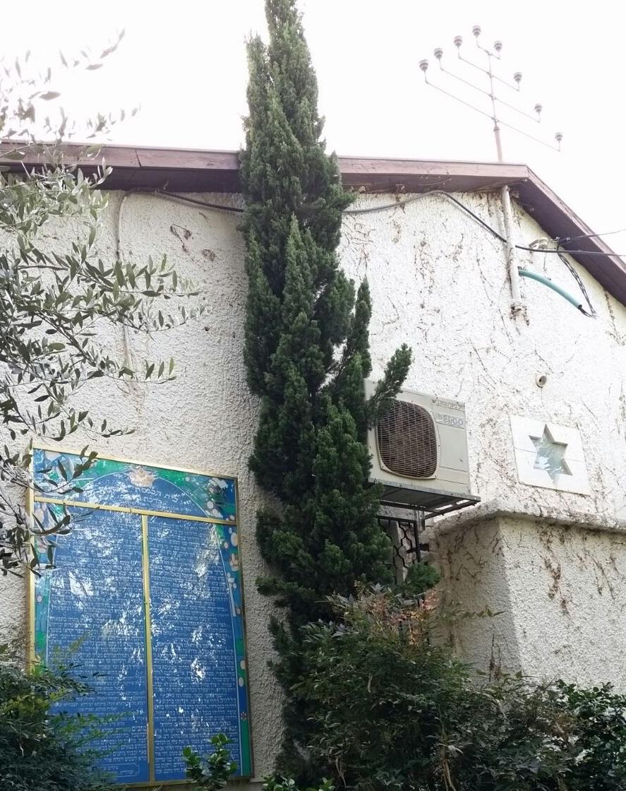 בית כנסת עציון